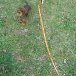 archi-osage-0-180 cm per 44 libbre